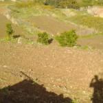 CAMPI ALCAMO
