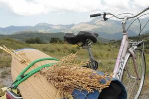bici y